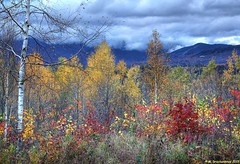 Fall foliage in Stowe Vermont (PhotosToArtByMike) Tags: autumn vacation mountain fall rural vermont scenic newengland stowe vt greenmountains sunsetpoint route100 stowevermont resorttown backcountryroad townofstowe