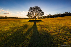 Farewell Autumn (basketballfreak6) Tags: autumn light sunset colour tree canon angle wide australia brisbane lee queensland filters cpl nisi uwa gnd 5d3 1635lf4is