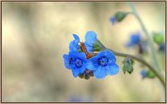 Popular Flower