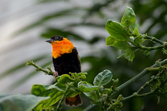 Life in the Biosphere (FButzi) Tags: expo piano biosphere olympus genova porto antico renzo bolla omd foresta em10 pluviale biosfera