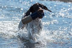 FAN_4024.jpg (Flemming Andersen) Tags: dog water seaside zigzag