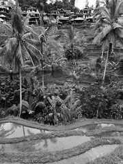 the valley of dreams (SM Tham) Tags: blackandwhite bali water monochrome buildings reflections palms indonesia landscape outdoors island asia valley hillside paddyfields riceterraces coconuttrees bananatrees tegalalang