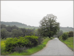 A rainy spring day (Stella VM) Tags: road trees tree green field landscape spring village bulgaria          murchaevo