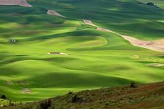 Spring Green (slotibartfast) Tags: green washington spring spokane farm hills rolling palouse steptoebutte