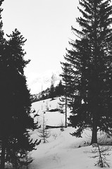 (Louise de Cours) Tags: trees winter blackandwhite mountain snow art film nature forest photography nikon hiking lifestyle explore 55mm 2015