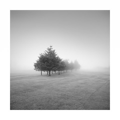 Grey Day (Rohan Reilly Photography) Tags: morning trees ireland mist fog golf square cork skibbereen