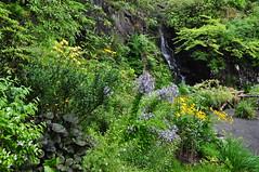Dans les jardins, Dunvegan castle, le de Skye, Ross and Cromarty, Highland, Ecosse, Grande-Bretagne, Royaume-Uni. (byb64) Tags: park uk greatbritain parco skye garden island scotland ross highlands europa europe isleofskye innerhebrides unitedkingdom jardin eu escocia highland loch isle parc garten isla giardino ue schottland mcleod reinounido ecosse le rossandcromarty dunvegan scozia grossbritanien macleod dunvegancastle rossshire strath royaumeuni granbretana grandebretagne vereinigtesknigreich hbrides clanmacleod dnbheagain ledeskye hbridesintrieures