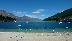Seagulls, take a flight on the Lakeside (Brice Retailleau / Quintessence de Voisinage) Tags: new travel blue newzealand sky panorama seagulls lake mountains bird beach nature water birds animal animals fauna composition landscape flying scenery colours outdoor earth wildlife scenic sunny bluesky bleu ciel zealand shore colourful paysage extrieur waterscape animaladdiction fantasticwildlife