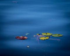 Marriott's Cypress Harbour - Orlando Florida (BDA Rebel) Tags: lake marriott outside villa lillypads cypressharbour