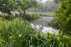 (Arnaud999) Tags: china flower water fleur asia asie watertown chine zhejiang
