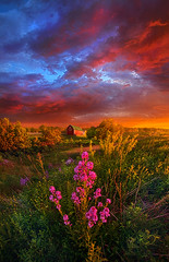 A Wisconsin Story (Phil~Koch) Tags: life park camera morning travel blue light sunset portrait sky orange sun art love nature colors beautiful field lines weather yellow vertical wisconsin clouds barn rural sunrise canon season landscape outdoors photography hope dawn living amber office spring twilight heaven mood ray peace purple natural earth farm unity horizon fineart country joy arts scenic meadow inspired dramatic beam journey environment serene inspirational popular emotions hdr lilacs horizons flowersred trending