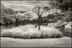 The White Garden. (Louis Shum) Tags: trees summer sky cloud white lake canada art nature water monochrome leaves canon ir blackwhite bc artistic monotone richmond infrared tone zonesystem goodpicture landscrape nicetone louisshum