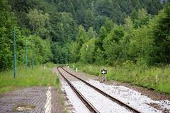Jedlina-Zdrj train station 11.06.2016 (szogun000) Tags: railroad overgrown station canon tracks poland polska rail railway disused platforms pkp lowersilesia dolnolskie dolnylsk canoneos550d canonefs18135mmf3556is jedlinazdrj d29285 d29286