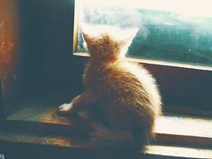 Cats Edition 7 - (26) (Robert Krstevski) Tags: pictures pet cats pets cute green animal animals yellow fauna cat photography kitten kitty kittens macedonia kitties cuteness photooftheday picoftheday animallovers catsphotography robertkrstevski robertkrstevskiblogspotcom catsedition7