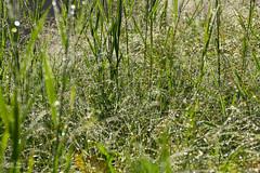 Sparkle Sparkle (kaeley.warren) Tags: waterdrops straws
