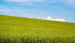 ito (Oroku1) Tags: windows red cloud color field landscape outdoor wheat serbia poppy colourful common opium papaver vojvodina srbija rhoeas polje njiva ito bulke