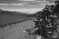 Lago Villa Traful (ainelucero) Tags: argentina lago playa tronco neuquen villatraful