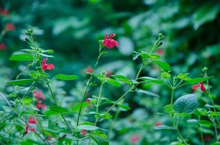 Little flower ...