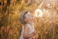 dandelion (Jagoda 1410) Tags: childhood naturallight dandelion childphotography childrensphotography kidsactingnatural