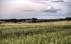 Winchester landscape in the Blue Hour (neilalderney123) Tags: rural landscape farm farming olympus crop fields bluehour winchester 2016neilhoward