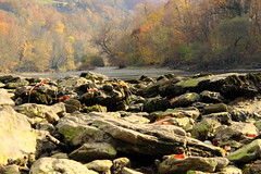 Drina River (Jelena1) Tags: autumn trees naturaleza tree hoja nature water leaves rock ro automne canon river leaf moss agua rocks eau wasser serbia herbst natur rivire blad list rbol otoo balkans fluss blatt arbre priroda vatten baum roca hst trd voda roches feuille srbija stene gestein drvo reka drina flod jesen bergart lisce bryophyta drvece riverdrina mahovina canonefs1855mmf3556is laubmoose canon600d westernserbia zapadnasrbija bladmossor canoneos600d rekadrina autumninserbia