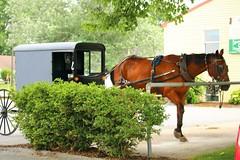 IMG_3765 (joyannmadd) Tags: amish horses intercourse pennsylvania kitchenkettlevillage farm animals lancaster coumty pa farms nature outdoors