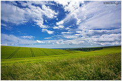 Blue and Green (Sharon Dow Photography) Tags: uk blue wild england nature beautiful field barley weather clouds downs sussex corn nikon brighton pretty farmers britain south ngc peaceful hills crop simplicity stunning wildflowers blueskies simple eastsussex naturalworld cloudporn southdowns happydays ditchling blueandgreen southernengland southeastengland wideanglelens 2016 ditchlingroad leadinglines awesomesky d7100 beautifulsummersday summer2016 nikond7100 sharondowphotography summersday june2016