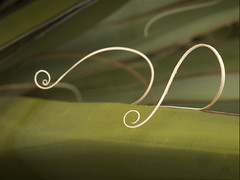 curlycues (marianna_a.) Tags: usa macro thread colorado bokeh spike agave curl curve hbw mariannaarmata p2510321