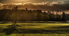Backroad backlit (virgil martin) Tags: panorama goldenhour landscape olympusomdem5 wellesleytownship waterlooregion ontario canada oloneo gimp microsoftice