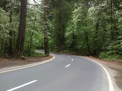 Yosemite Park - increíble!!! - todas las calles dentro del bosque de pinos, muy lindo!