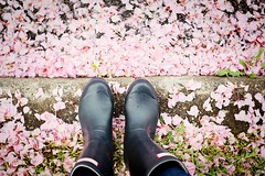 day 129/365 (a.commonplace.life) Tags: 365 springflowers rainboots project365 fromwhereistand