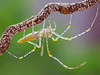IMG_0161 (thienbs) Tags: macro insect spider thienbs
