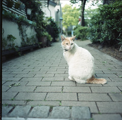 (gecko surface) Tags: 6x6 film cat square tokyo 120film bronica squareformat brownie filmcamera zenzabronca