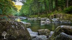 Afon Llugwy - Summer (Stu Worrall Photography) Tags: trees green water rock wales river flow rocks north betwsycoed afon llugwy afonllugwy riverllugwy