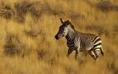 Namibia - Namib Desert (jschort10) Tags: birds skeleton coast wildlife lion safari elephants botswana namibia chobe moremi etosha himba vlei sossus canonsx50 schwakopmund