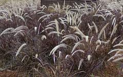 DSC_1932 copia (Luis PS.) Tags: flower nature garden spain plantas widescreen karma utopia 1610 d3100