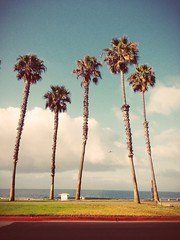 SoCal Palms (c_kreature) Tags: california ca waves palmtrees socal southerncalifornia orangecounty huntingtonbeach theoc hb iphone huntingtondogbeach iphone5 orangeco bensoto iphoneography vscocam uploaded:by=flickrmobile flickriosapp:filter=nofilter