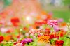 Color explosion (MY PINK SOAPBOX) Tags: flowers flores floral fleur garden colorful jardin vivid fiori pinkflowers abstractflowers jarden happyflowers pinkgarden anahidecanio flowersinlight flowerabstraction artyzenstudios