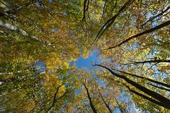 Autumn in Thuringia // Eichsfeld :-: Rusteberg (:: Blende 22 ::) Tags: autumn color castle leaves canon germany deutschland thringen ruins herbst thuringia ruine schloss bltter bunt ef1740mmf4lusm rusteberg canoneos5dmarkii