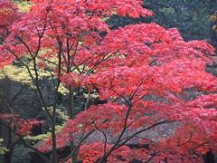 2013-10-20 [03] Den Haag (Reinoud Kaasschieter) Tags: netherlands japanesegarden nederland denhaag thehague zuidholland japansetuin parkclingendael clingendaelpark