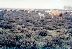 winter in holland (7) (bertknot) Tags: winter winterinholland