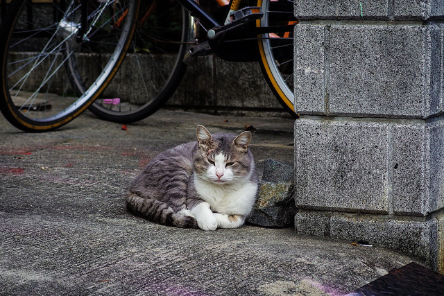 Today's Cat@2013-11-10