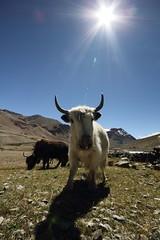 (thomas@photo) Tags: voyage trip india trek canon eos zanskar ladakh inde 550d