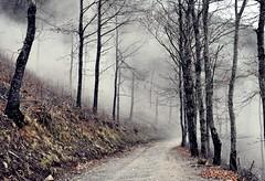 andiamo avanti... (Claudia Gaiotto) Tags: road trees misty fog forest mood nebbia sentiero brumes