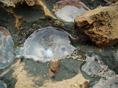 pozos de vida marina (Maria Andrea B.) Tags: sea naturaleza nature agua peces exotic pozos caracoles rocas oceano suelo aventura extremo acantilados erizos exotico vidamarina