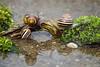 World's Busiest Bridge (yui fan) Tags: bridge nature water moss pond wildlife snail worlds busiest 500px detritivore ifttt