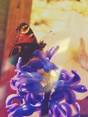 DSC08791 (I. AKHTAR) Tags: life travel flowers summer plants cold nature beautiful fashion youth butterfly garden photography rebel natural grunge explorer teenagers teens lifestyle pale adventure lightleak explore teen indie filmschool greenery lush boho cinematic disposable artschool artstudent filmstudent tumblr photographylife photographersontumblr originalphotographers iakhtar ikywork
