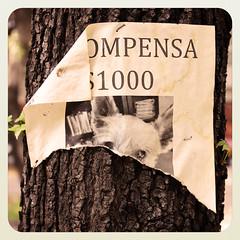 Recompensa v.2 (laap mx) Tags: dog tree mexico arbol lost mexicocity perro reward 1x1 perdido recompensa fakeinstagram seudoinstagram