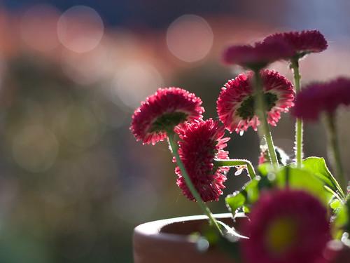 Sunny afternoon ©  Still ePsiLoN