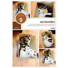 เจ้าแต้ม  เจ้าเลโก้ แมวลงกล่อง@ ซนจริงๆๆเลย InstaMag-MobileApp